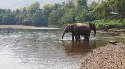 Découverte des éléphants et ferme aux orchidées