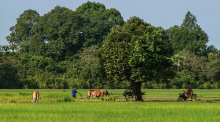 Vélo sur l'île de la soie