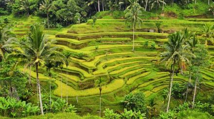 Bali en 4x4
