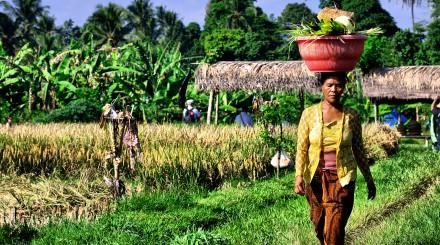 Douce évasion à Bali
