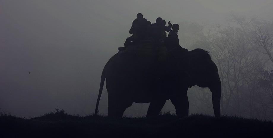 Demi-journée au village des éléphants