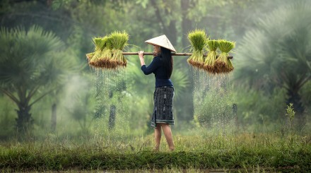 Expérience au village de Thuy Bieu