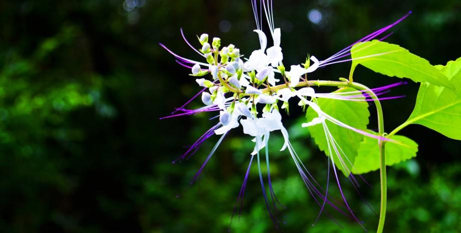Découverte du parc national de Kirirom