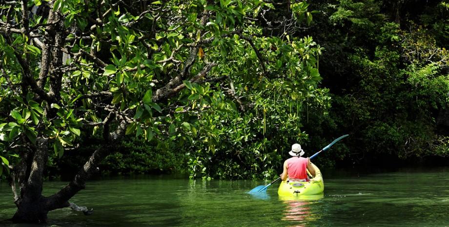 La mangrove en canoë