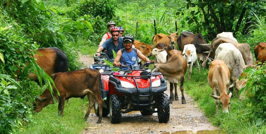 3 heures de Quad à Phang Nga