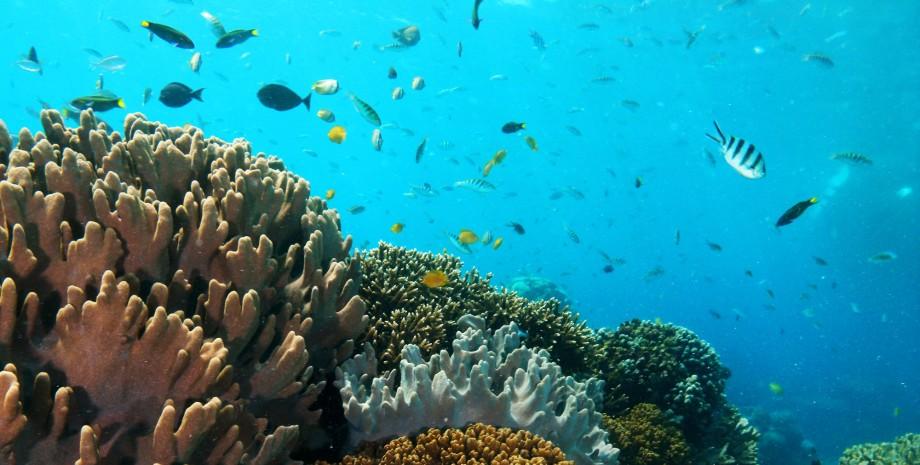 Snorkeling à l'île aux coraux