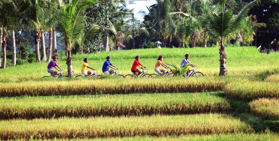 Les rizières en vélo électrique