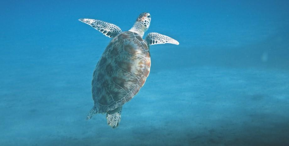 Snorkeling et détente à Tunku Abdul Rahman