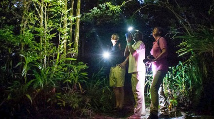 Balade de nuit en forêt