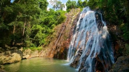 Dans la jungle de Koh Samui