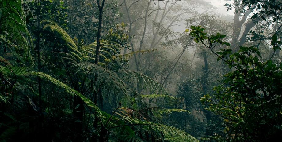 A la rencontre des orangs outans