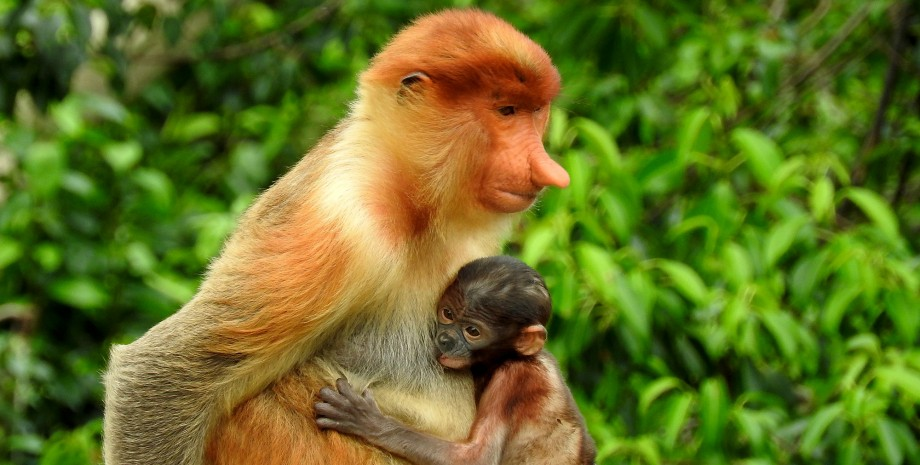 Croisière et randonnée à la rencontre  des orangs outans