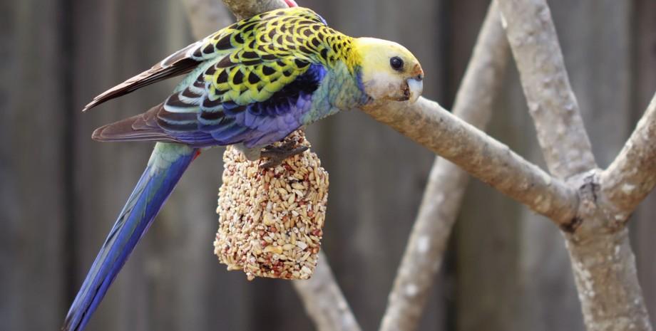 Taman mini et parc aux oiseaux
