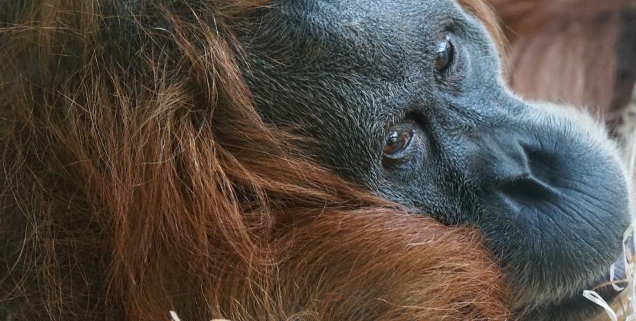 Eléphants et orangs outangs